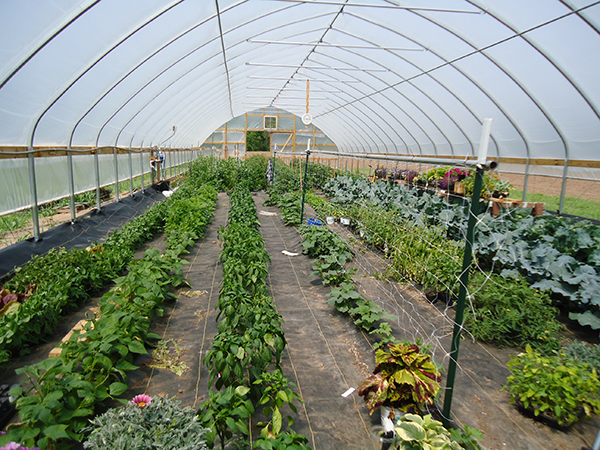 Malvitz Bay Farms CSA Hoop House