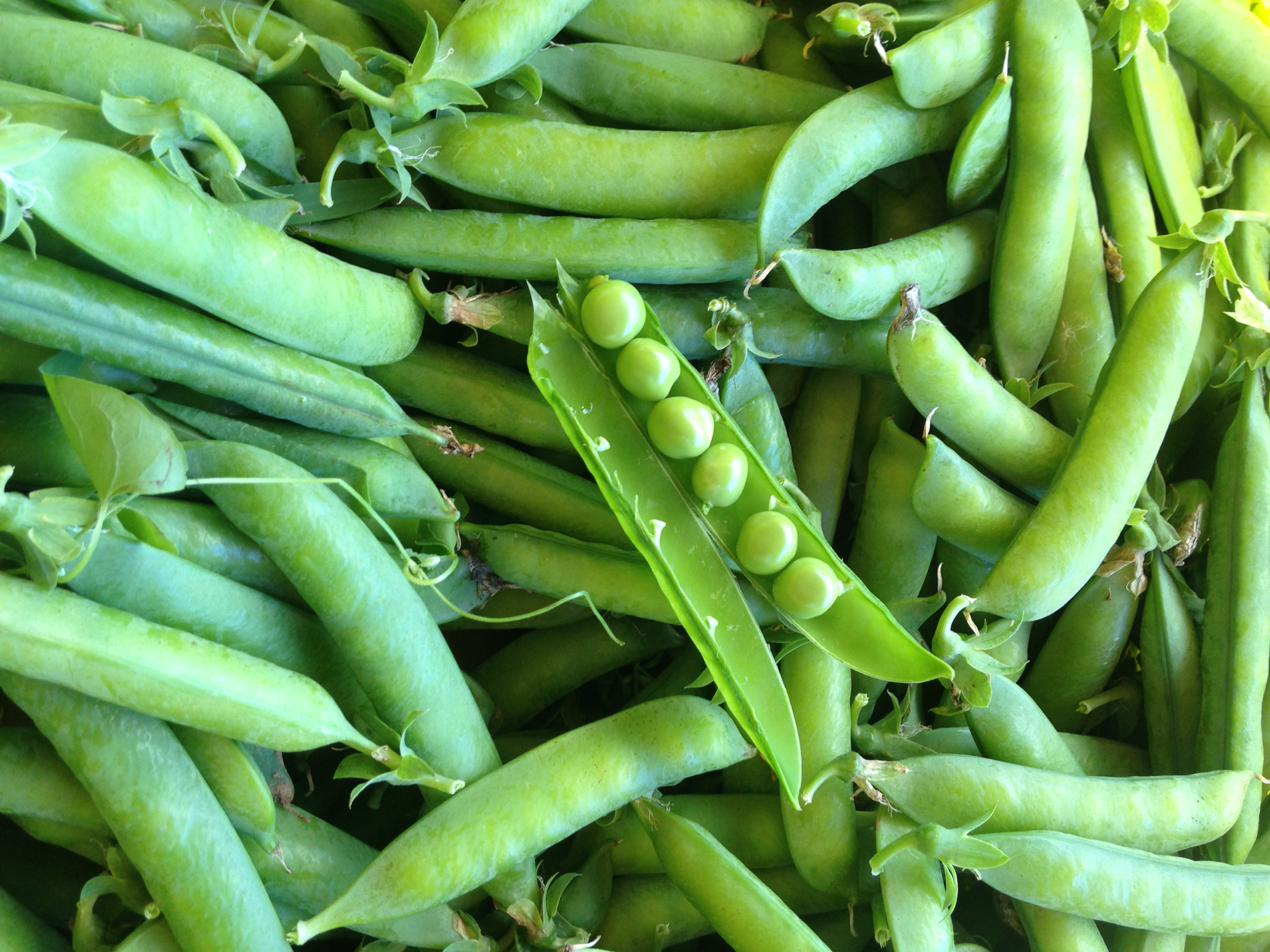 Malvitz Bay Farms peas