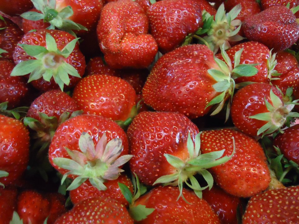 Malvitz Bay Farms strawberries